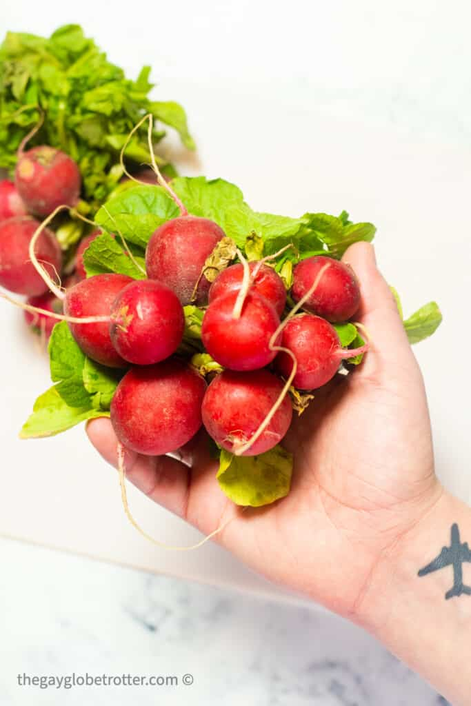 A hand holding a bunch of radishes with greens.